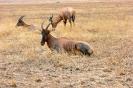 Serengeti_10