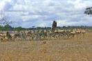 Serengeti_13
